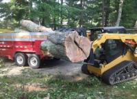 Zielinski-tree-service.png