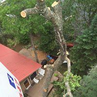 zielinski-tree-service.jpg