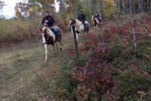 An image of three horse back riders rounding a curve in a trail in the trees.