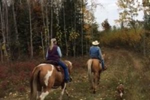 An image of two riders on horses following a trail in the trees.