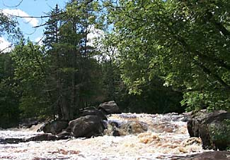 An image of a river flowing around rocks and trees.